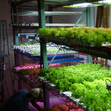 Vertical Hydroponics Growing-Higher Thinking