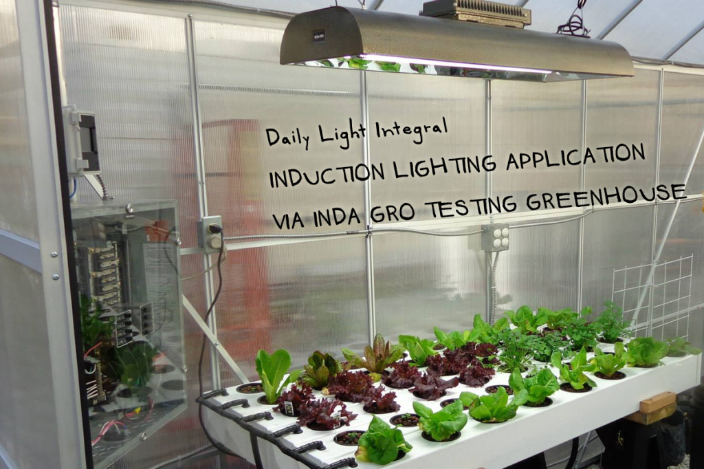 daily light integrals induction lighting hydroponics greenhouse
