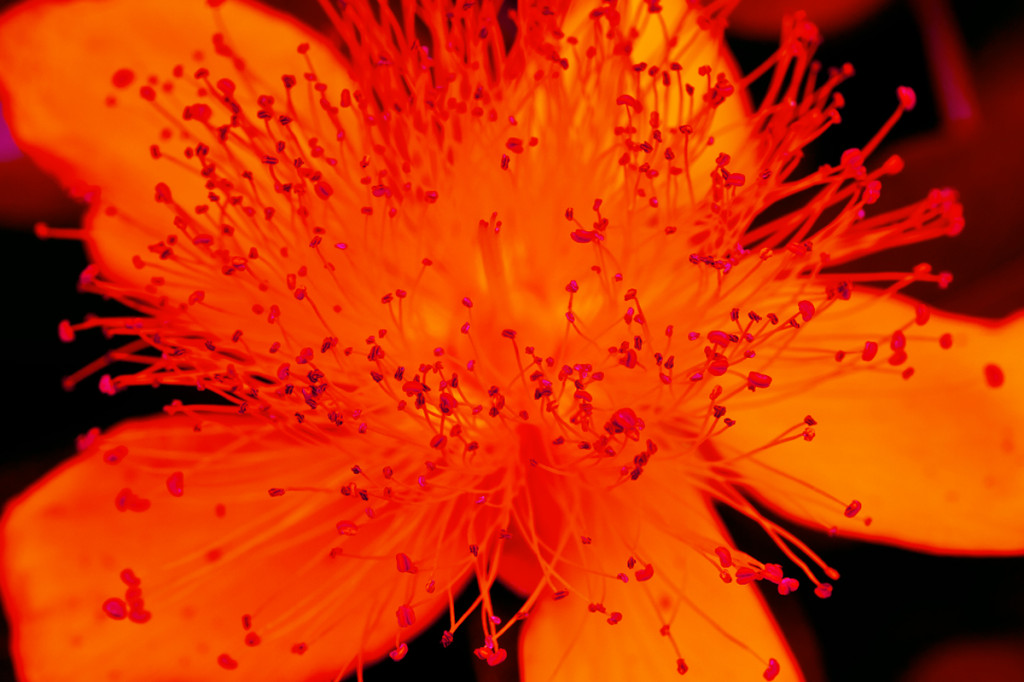 grozine hydroponics macro flower stamen