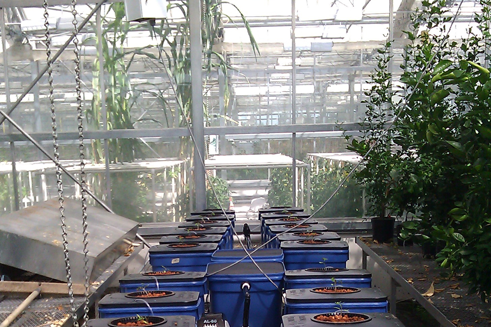 Under Current Hydroponics By Current Culture Cch2o