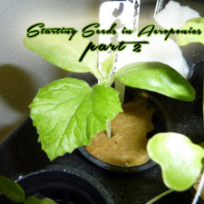 Aeroponic Seed Starting Test Results