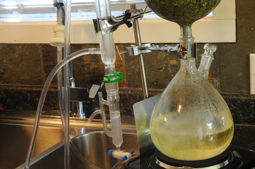 garden herbs essential oils extracts steam distillation