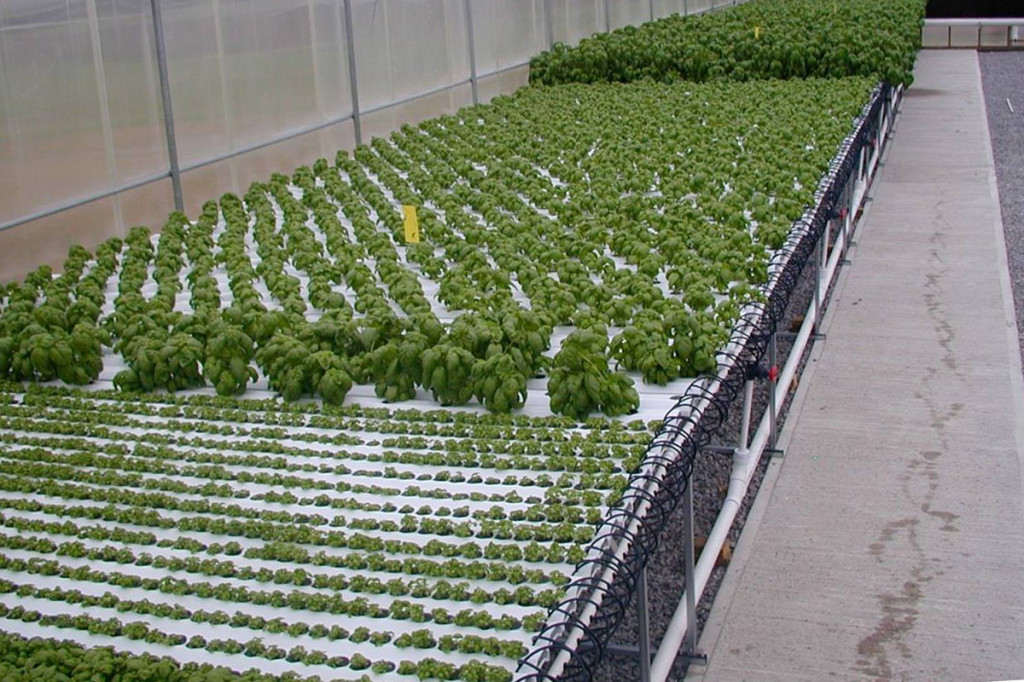 american hydroponics nft basil growing systems