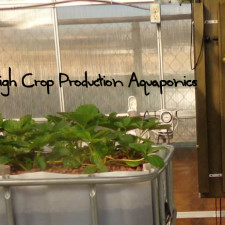 High Crop Production Aquaponics