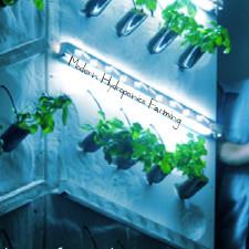 Modern Hydroponics Farming