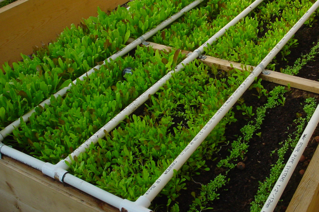 water savings greenhouse gardening