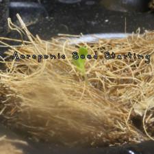 Aeroponic Seed Starting