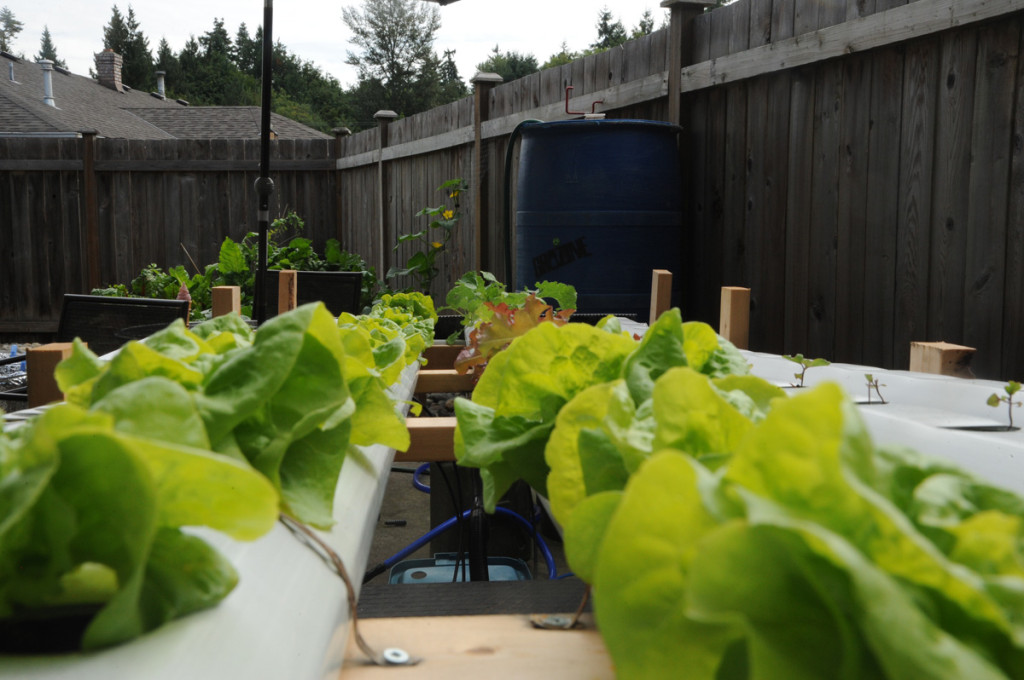 back yard hydroponics growing