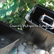 Cleaning Hydroponics Systems