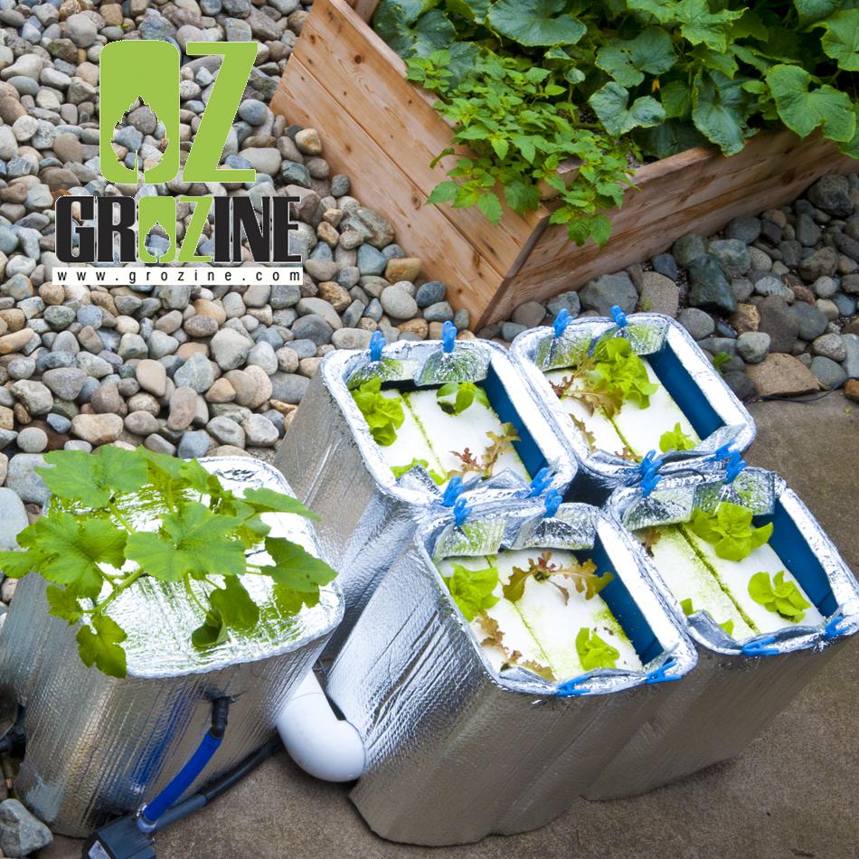 indoor vs outdoor hydroponics grow tips grozinegrozine. Black Bedroom Furniture Sets. Home Design Ideas