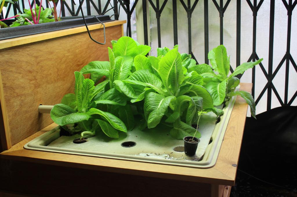 raft hydroponics
