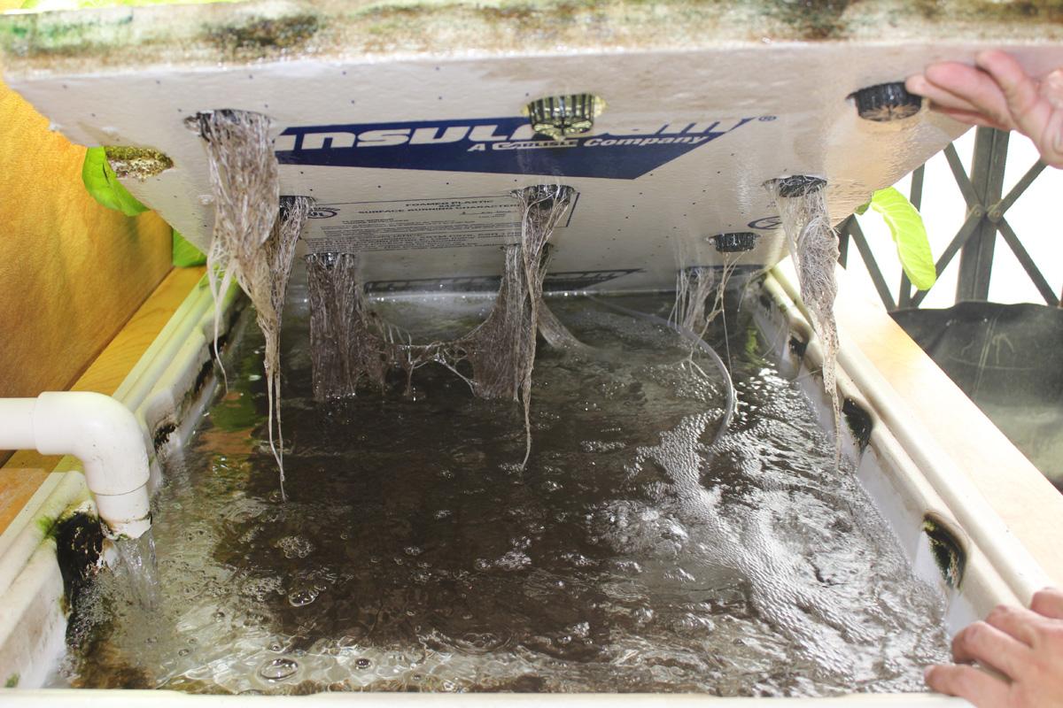Raft Hydroponic Systems