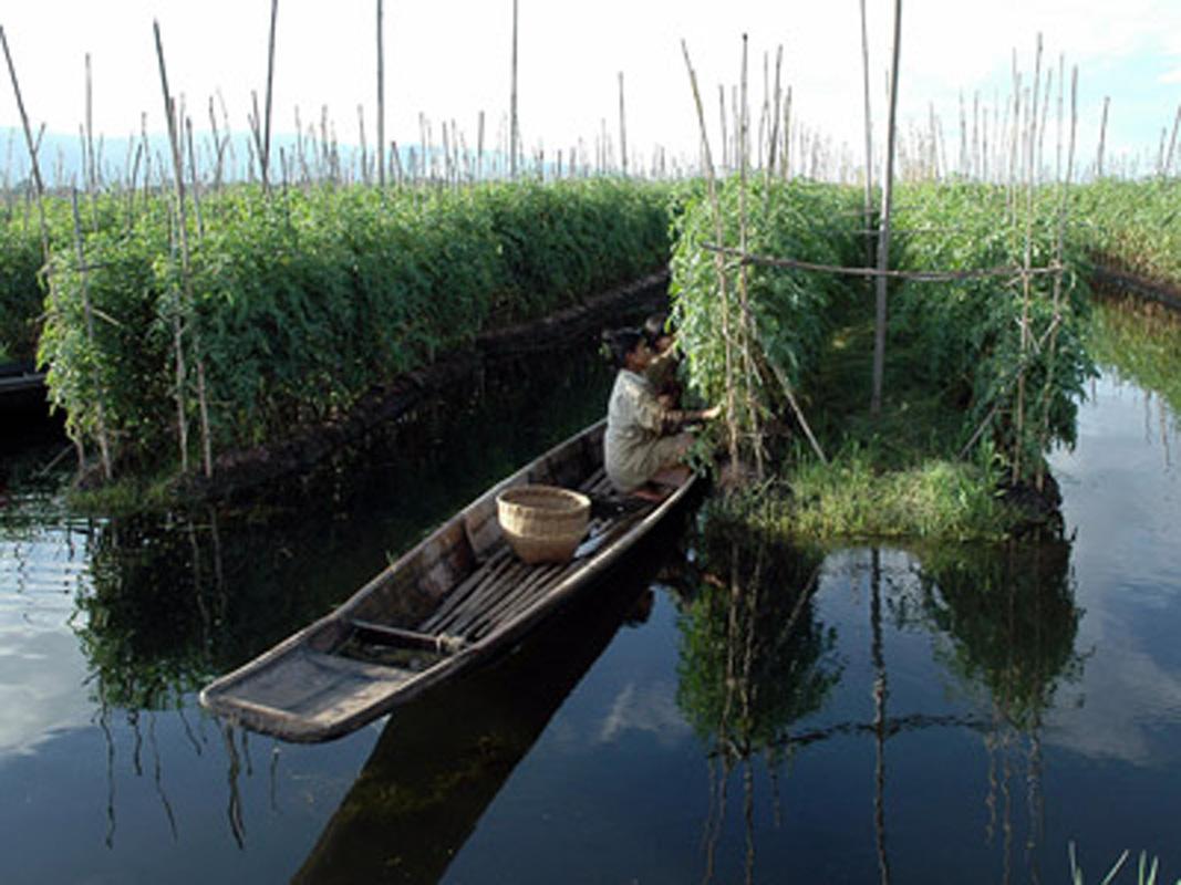 Raft hydroponic systems grozinegrozine for Fish pond hydroponics
