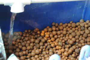 aquaponics bio filter