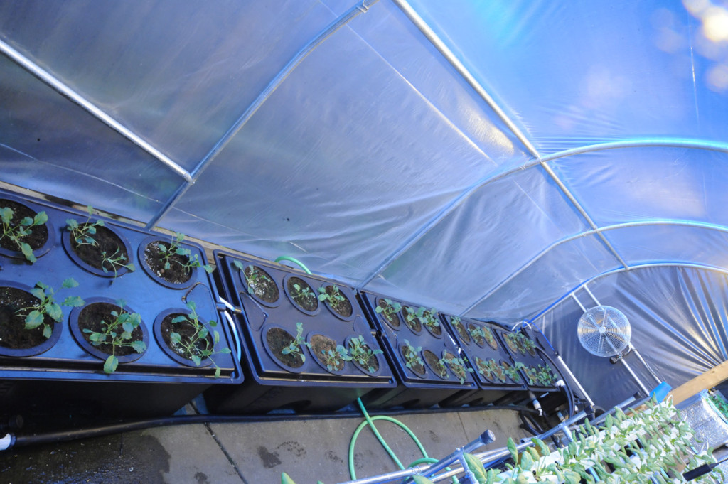 hydroponic greenhouse side a