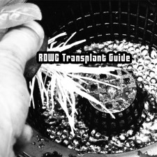RDWC System Transplant Guide