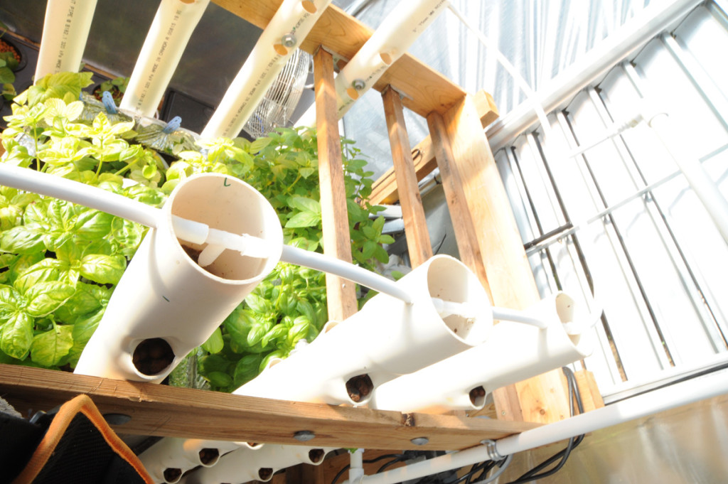 DIY Vertical Aquaponics System ready to plant. Notice both sides can be used in this arrangement, while keeping an existing established aquaponics bio media grow system.