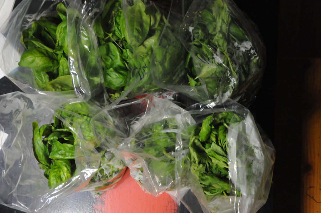packaged hydroponic basil