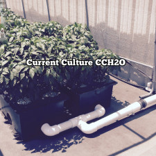 Current Culture CCH2O