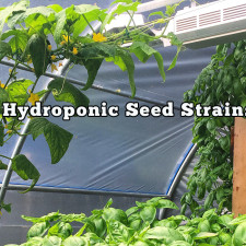 Hydroponic Seed Strains Selections