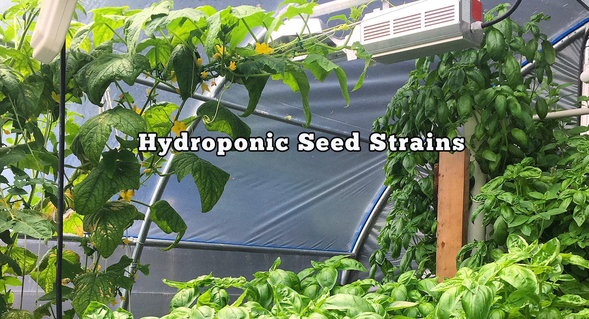 Hydroponic Seed Strains Selections Grozinegrozine