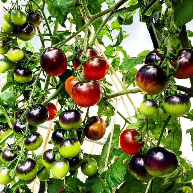 How Much Food Can Hydroponics Produce