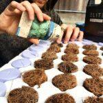 planting seeds aeroponics
