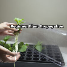 Beginner Plant Propagation Easy Guide