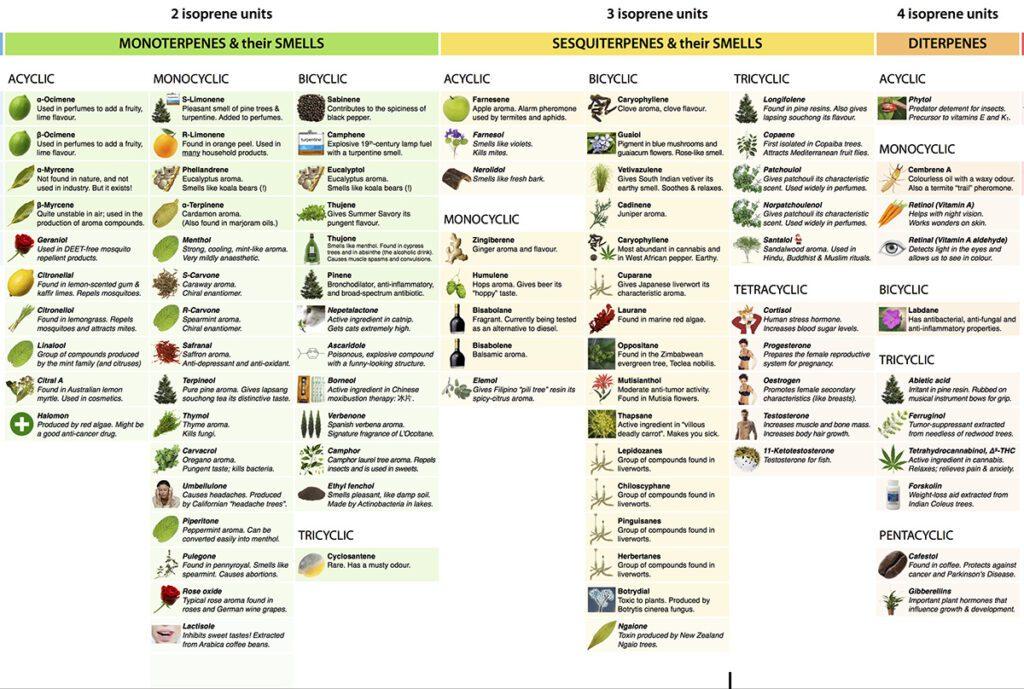 terpenes-listing-web