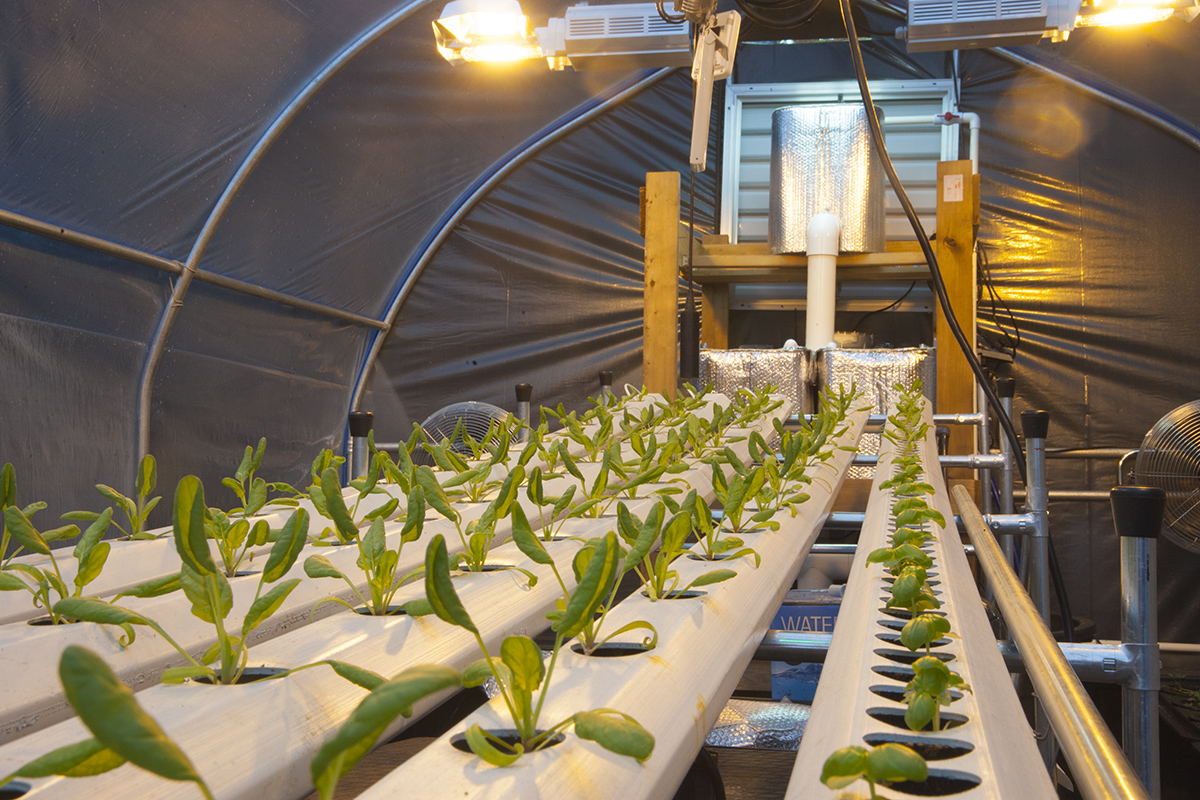 an overview of the advantages of producing crops through use of hydroponics Hydroponic farming is the practice of growing crops by using mineral nutrient   passive system uses a growing medium to retain moisture and supply the  nutrients active  farming is a sustainable farm practice that offers a few  remarkable benefits:  overview growers seed companies input suppliers.