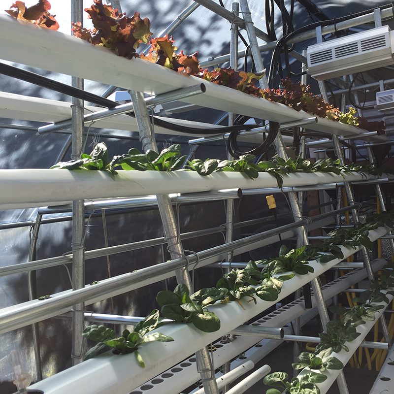 vertical hydroponics nft system