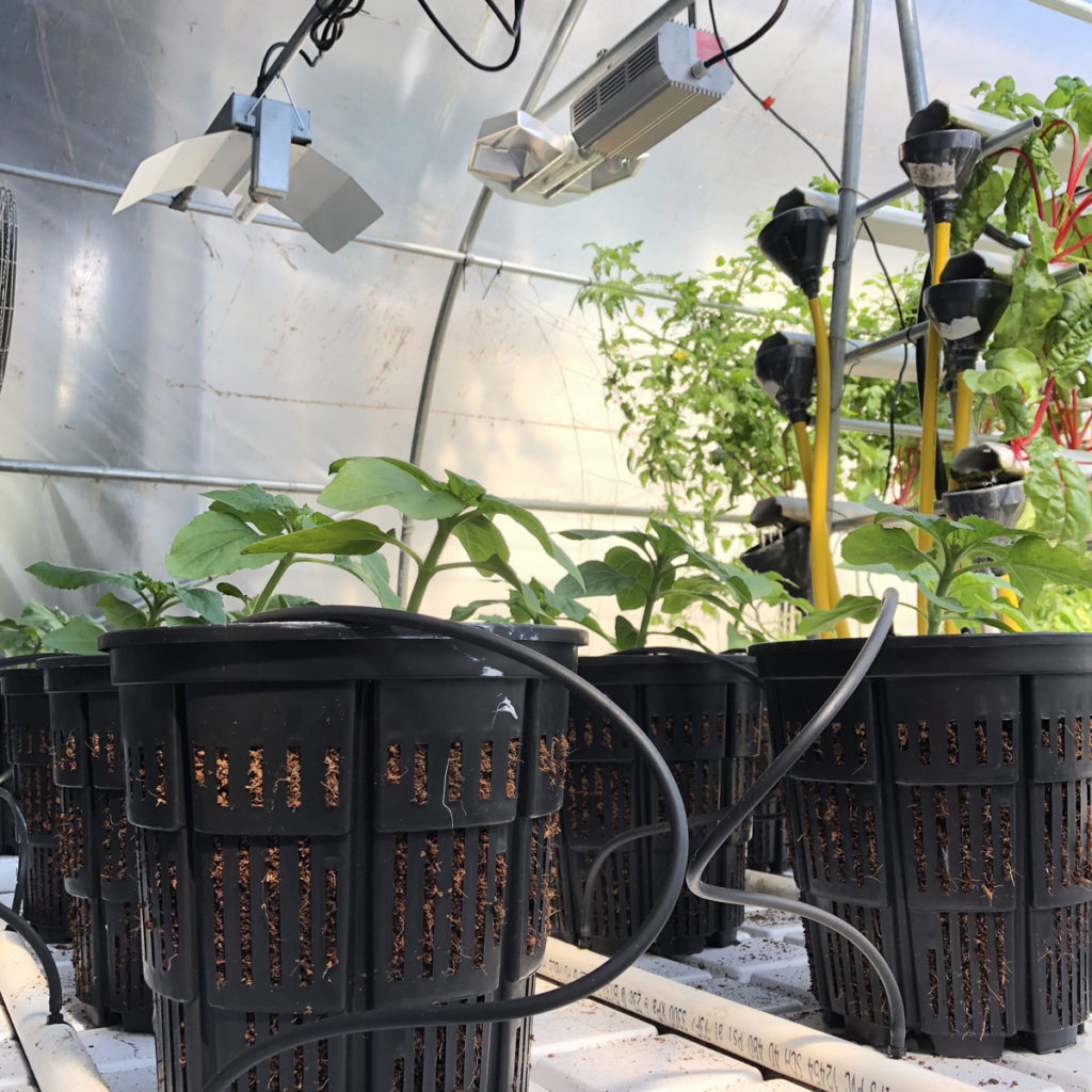 hydroponic greenhouse food crops
