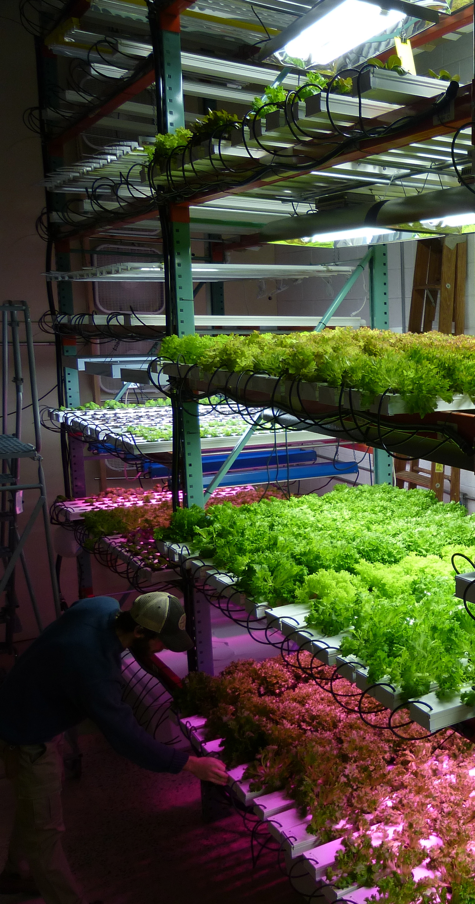 Vertical Hydroponics Growing Higher Thinking Grozinegrozine