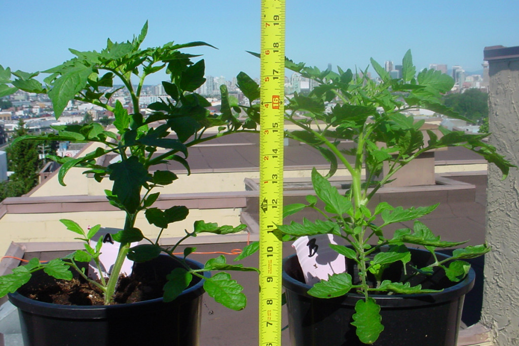 beneficial soil life grow test