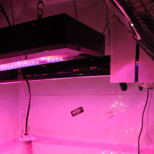 LED and HID Grow Lights Compared