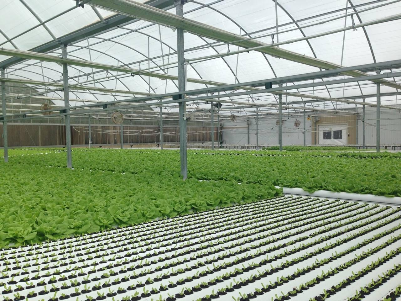 Hydroponics Yields Versus Field Grown Harvest Weights