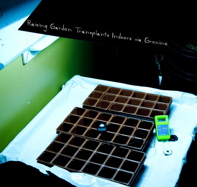 raising garden transplants indoors-aspect
