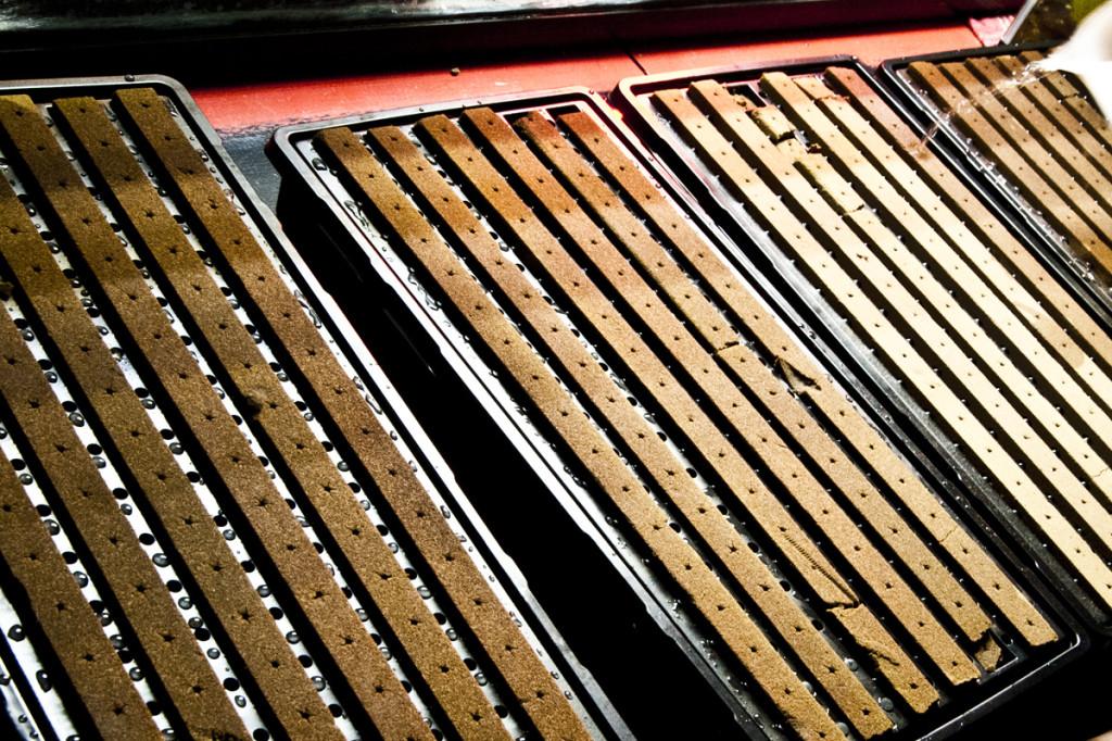 spring seeding trays hydroponics