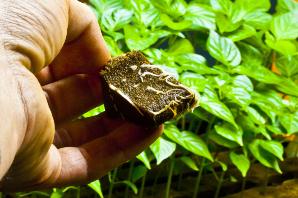 growing tips for healthy hydroponics seedlings