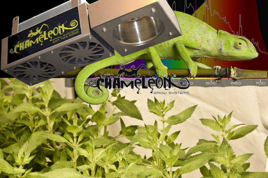 chameleon grow systems