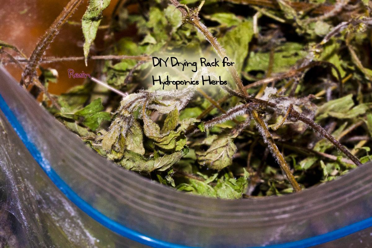 Diy Drying Rack For Hydroponics Herbs Grozinegrozine