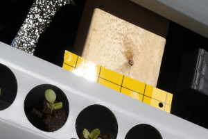 nft pests sticky traps