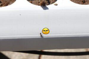 hydroponics pests ants