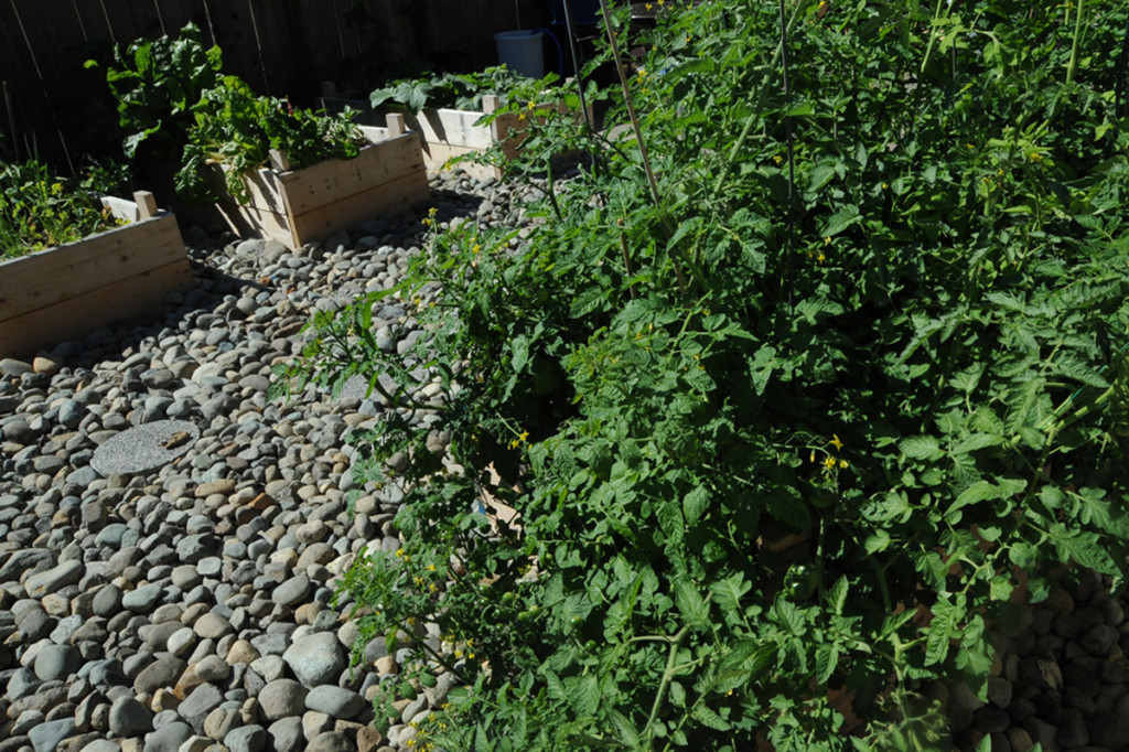 reusing soilless grow mix is it ok