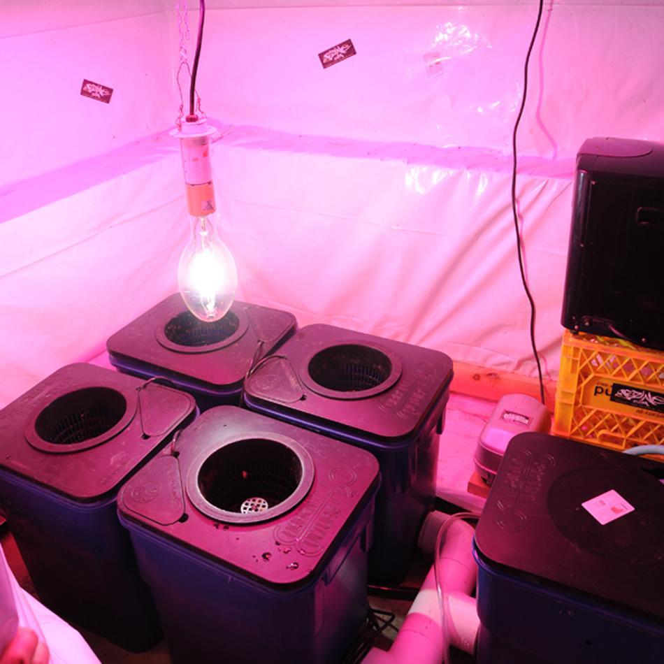 indoor hydroponics system