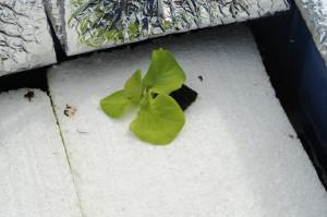 raft hydroponic system