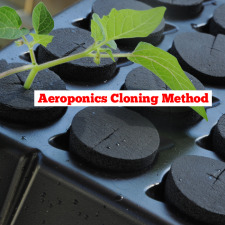 Aeroponics Cloning Method