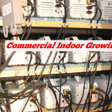 Commercial Indoor Growing