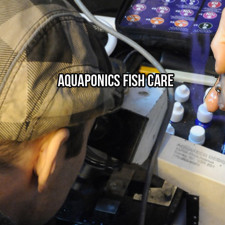 Aquaponics Fish Care
