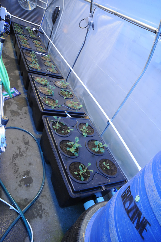 hydroponic greenhouse side b